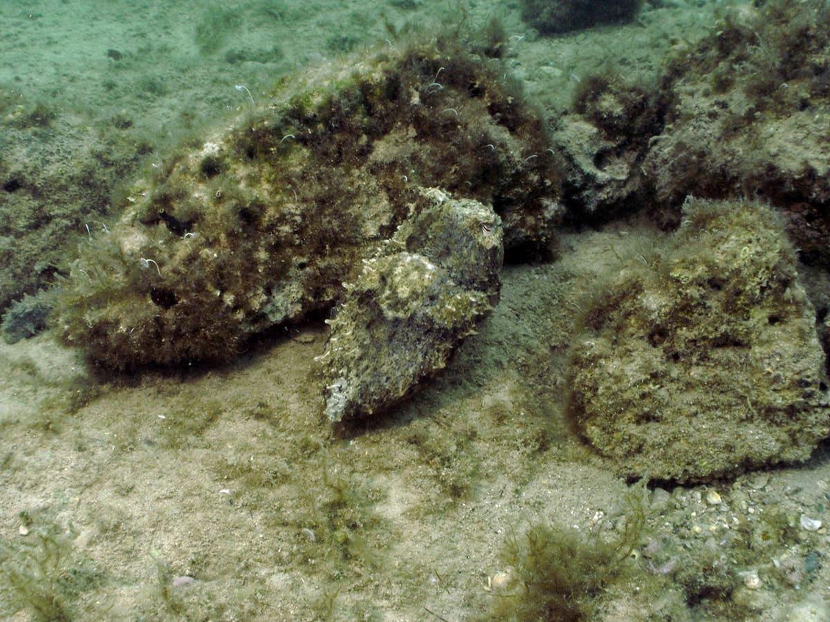 EOBV Ökologie Unterwasser